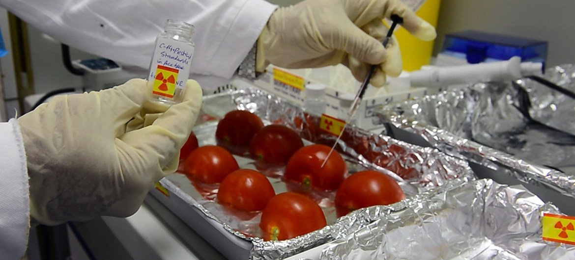 A researcher tests tomatoes at the IAEA's Food and Environmental Laboratory in Seibersdorf, Austria.