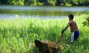 A resident of the National Tapajos Forest in Brazil collects wild foliage for preparing a meal.