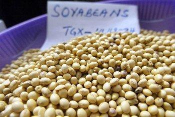 فول الصويا معروض للبيع في سوق بأميركا الجنوبية.