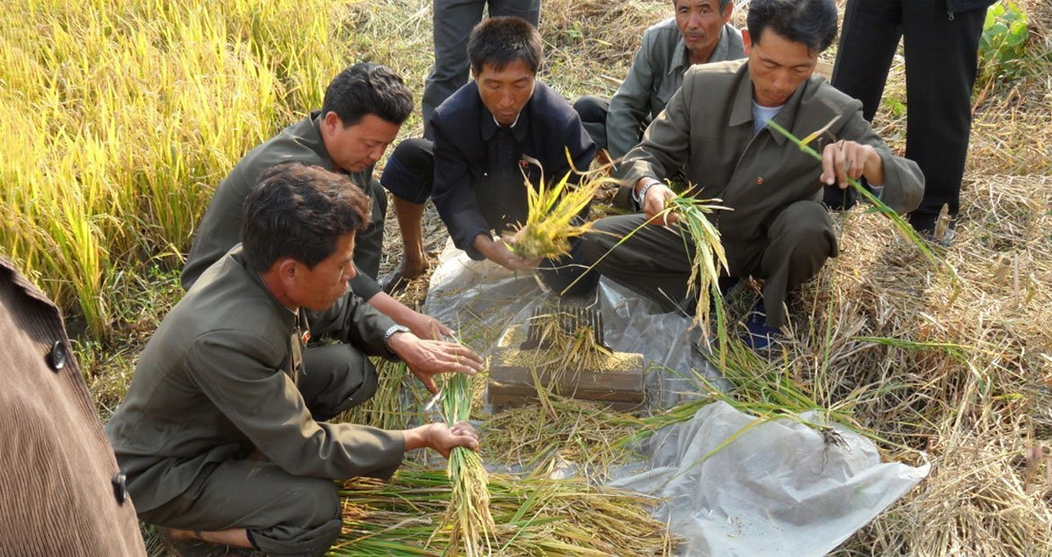 DPRK's crop production, including staple rice, maize, potatoes and soybean, were severely hit by prolonged drought in 2017.