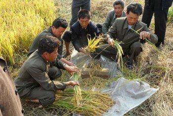 """Власти КНДР намерены повысить производительность в сельском хозяйстве и ввести восьмидневку """"бесплатной работы на государство"""""""