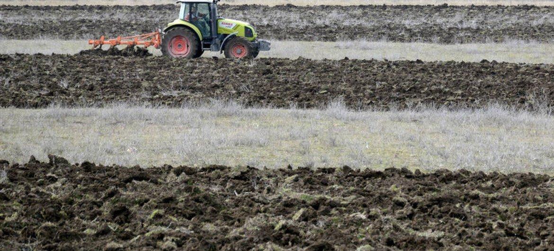 Грузия располагает идеальным климатом для производства большого разнообразия кухонных трав