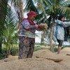مزارعات في إقليم كوتاباتو في الفلبين.