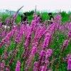 观鸟爱好者和游客在中国东南部的浙江慈溪湿地游览。2016年,共有9.04亿海外游客前往包括中国在内的二十国集团国家旅游,带来超过1兆亿美元的收入,相当于二十国集团出口总额的6.3%。