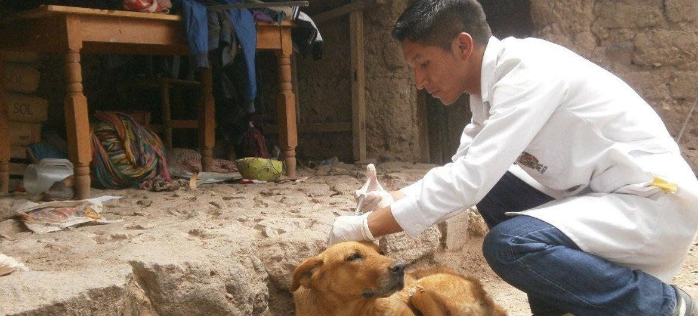 Un veterinario vacuna a un perro callejero. Foto: OPS/OMS
