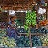 Vírus Nipah é transmitido pelo consumo de frutas com urina de morcegos infectados