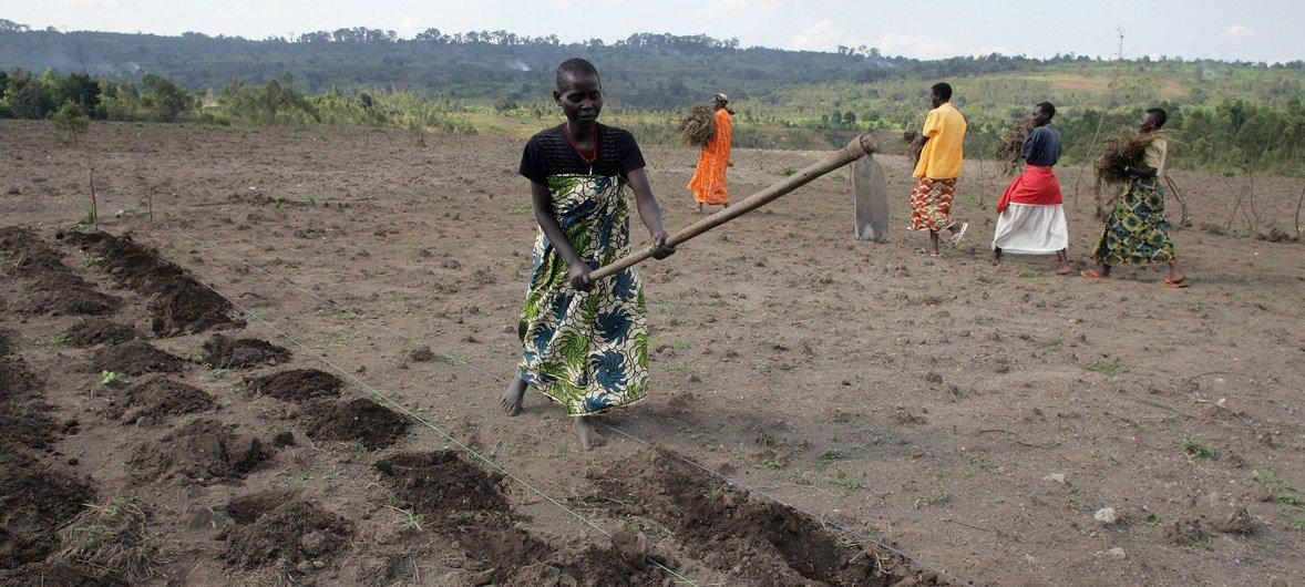 São precisos mais trabalhos para jovens em áreas relacionadas com agricultura.