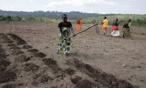Women of the Batwa community tilling the soil with hoes in preparation for planting potatoes, in Gashikanwa, Burundi.