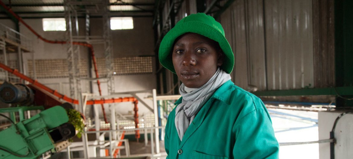 A worker sorts a green leaf tea before it reaches the main processing floor at the Kitabi Tea Processing Facility in Rwanda.