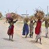 Des personnes déplacées par la violence de Boko Haram ramènent du bois dans leur camp à Dikwa, dans l'Etat de Borno, au Nigéria (archives).