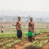 Women tend to crops in Greater Kasai, the Democratic Republic of the Congo.
