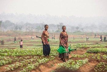 Des femmes cultivant dans le Grand Kasaï, en République démocratique du Congo.