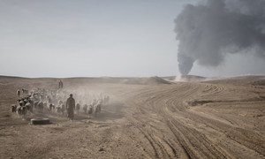 In Iraq, displaced civilians and their livestock flee fighting. Conflict in some countries in the Near East and North Africa is sparking spikes in hunger.