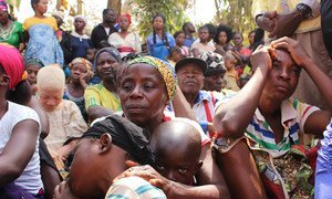Families, fleeing unrest in English-speaking Cameroon, seek refuge in Utanga, Obanliku, Nigeria. Ongoing clashes between Cameroonian State forces and armed separatists have raised concerns of human rights violations.