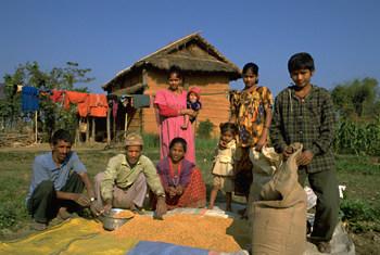 Une famille d'agriculteurs étalent des céréales pour les faire sécher à l'extérieur de leur maison dans le district de Chitwan, dans le  centre du Népal.