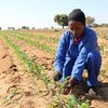 مؤتمر الفاو الإقليمي يناقش الزراعة المستدامة وتحدي توظيف الشباب