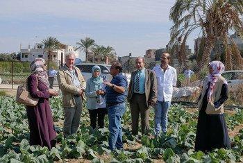 Des responsables de l'Office de secours et de travaux des Nations Unies pour les réfugiés de Palestine dans le Proche-Orient (UNRWA) visitent un projet agricole dans la bande de Gaza soutenu par le Programme de création d'emploi mis en place par l'agence.