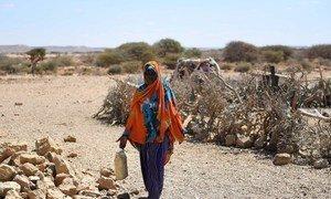 Une femme du village de Salaxley frappé par la sécheresse, dans la région du Puntland, en Somalie.