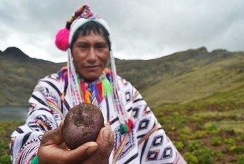 17ª. Sessão do Fórum Permanente sobre Assuntos Indígenas