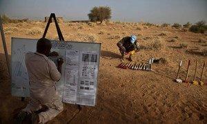 Le Service d'action antimines de l'ONU (UNMAS), en collaboration avec les soldats de la paix sénégalais, effectue une recherche visuelle sur le site d'un futur camp militaire de l'ONU à Gao, au Mali.
