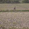 Région de Sagaing, Myanmar : une fille traverse un champ agricole endommagé par des inondations qui ont enseveli la terre fertile sous plusieurs mètres de boue.
