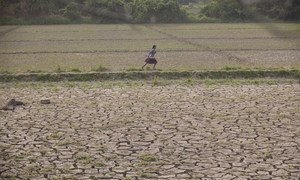 A girl runs through deserted farmland in Mynmar's Sagaing region where floods buried valuable fertile soil under several feet of mud which later dried hard and cracked, making land preparations very difficult and expensive.