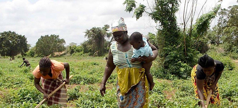 Em Moçambique, inundações e seca afetam 54.853 pequenos agricultores.