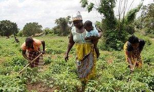 Moçambique reduziu em 32% o nível de insegurança alimentar e o número de pessoas com fome nos últimos 10 anos.