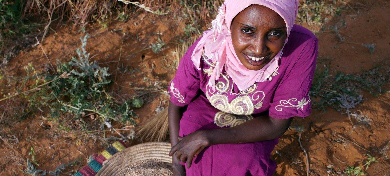 Buthaina Ahmed Ibrahim, de 28 años, cosechando sésamo. Es una de las 30.000 mujeres rurales de Sudán cuyas vidas han cambiado como resultado de una iniciativa de microfinanciación.
