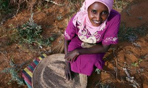 Buthaina Ahmed Ibrahim, 28, is harvesting sesame. She will use the seeds to make and sell sweets. She is one of 30,000 rural women across Sudan whose lives have been turned around as a result of micro-financing.