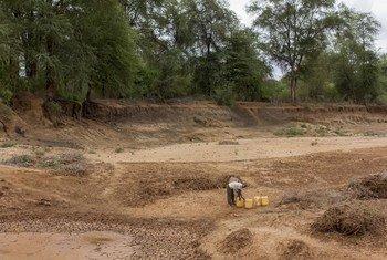 Dans l'est du Kenya, une personne « creuse » à la recherche d'eau dans un lit de rivière asséché