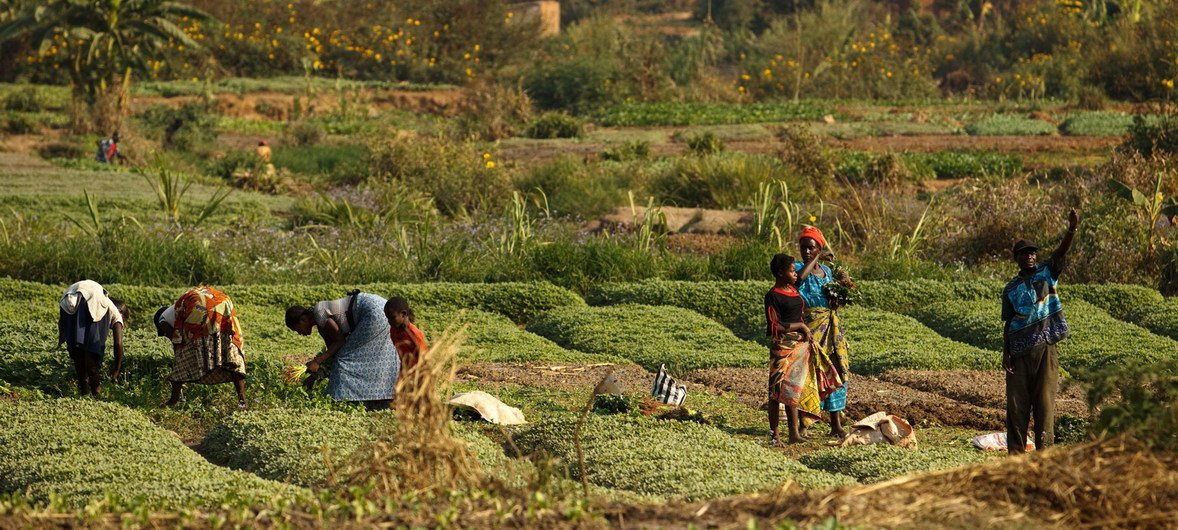 Agricultura e alimentaçãoempregammais da metade da força de trabalho ativa da África Subsaariana