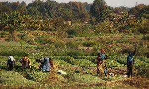L'agroécologie peut contribuer à accélérer la réalisation du Programme de développement durable à l'horizon 2030.