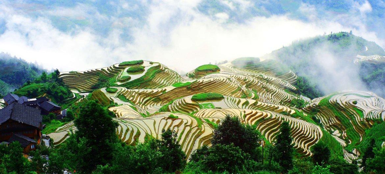 中国西南地区的美丽梯田。中国云南的梯田与贵州的稻鱼鸭系统被选为粮农组织全球农业文化遗产。