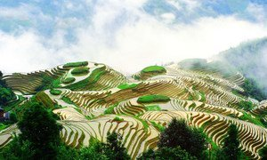 Kilimo cha mpunga katika milima za Longsheng Longji Terraces, China