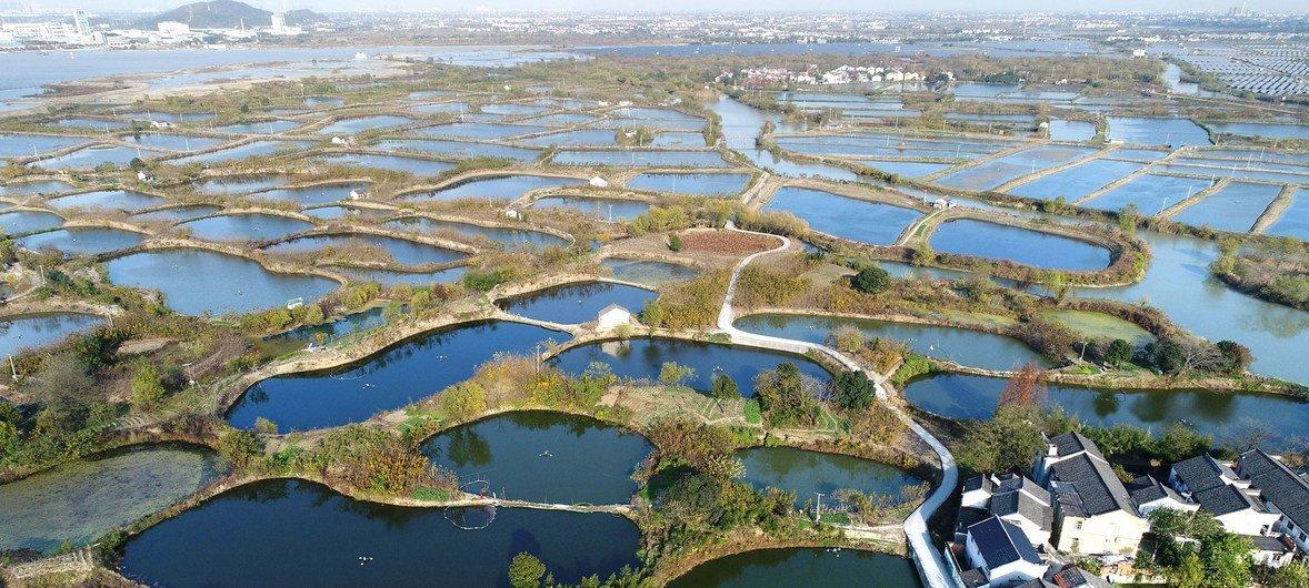 浙江湖州的桑基鱼塘系统。