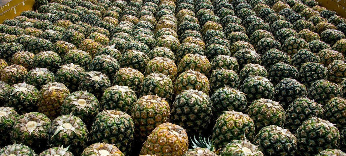 The skins of the pineapple fruit can be transformed into biodegradable packaging.