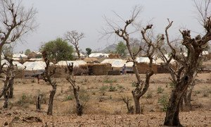 A refugee camp in northern Cameroon hosting Nigerian refugees (file photo). Boko Haram violence in north-east Nigeria forced thousands to flee their homes, many sought refuge in neighboring countries.