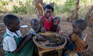 Une famille mange son repas quotidien de pois séchés dans le district de Balaka, au Malawi (photo d'archives).