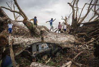 أطفال يلعبون على شجرة سقطت خلال إعصار بام في 13 مارس 2015 في جزيرة فانواتو بالمحيط الهادئ. 29 مارس 2015.