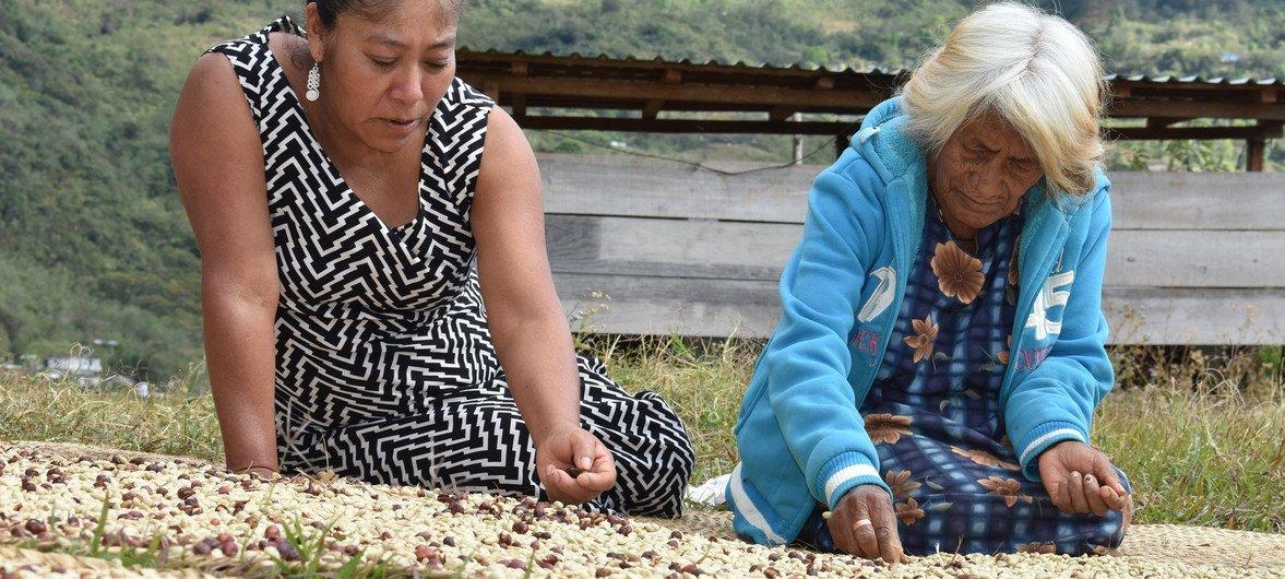 Vice-chefe da ONU destacou potencial das comunidades indígenas
