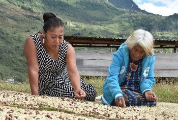 El empoderamiento de las mujeres rurales e indígenas puede erradicar todas las formas de malnutrición.
