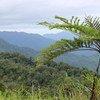 منطقة محمية للغابات في فيجي. غطاء الغابات أمر حيوي للحفاظ على النظام الإيكولوجي في المنطقة، وهو بدوره حاسم بالنسبة للمجتمعات في جزر المحيط الهادئ.