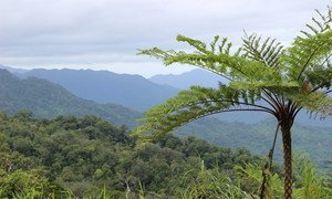 A community forest conservation area in Dalaikoro, Fiji. Forest cover is vital to maintain the ecosystem in the region, which is in turn critical for communities in the Pacific island nation.