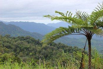 Une aire de conservation de la forêt communautaire de Dalaikoro, Fidji. La couverture forestière est vitale pour maintenir l'écosystème dans la région.