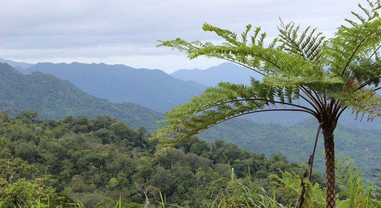Eneo la misitu linalohifadhiwa na jamii huko Dalaikoro, Fiji. FAO inasema misitu ni muhimu kwa uhai wa binadamu na viumbe wengine.