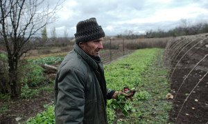 """Микола со своей женой живет в деревне у """"контактной линии"""". Он выращивает редис, чтобы хоть как-то прокормить себя, но деревня давно опустела и покупать его урожай некому"""