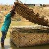 L'OIM et ses partenaires plantent de l'herbe de vétiver, stockée dans des panières flottantes en bambou, afin de réduire l'érosion des sols dans les camps de réfugiés de Cox 's Bazar.