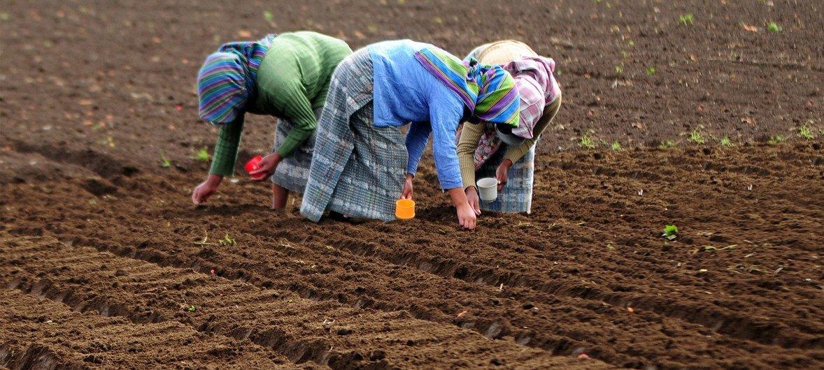 El documento pide reforzar el empoderamiento de las mujeres rurales e indígenas para erradicar todas las formas de malnutrición.
