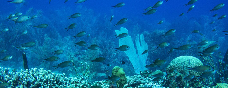 """Portugal quero mundoem """"mãosàobra""""para assegurar retoma daconservação e do uso sustentável dos oceanos"""